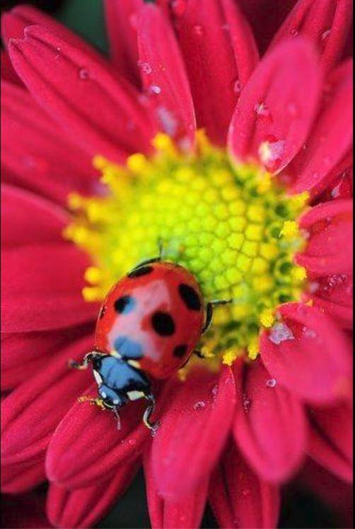 Lady bug ~