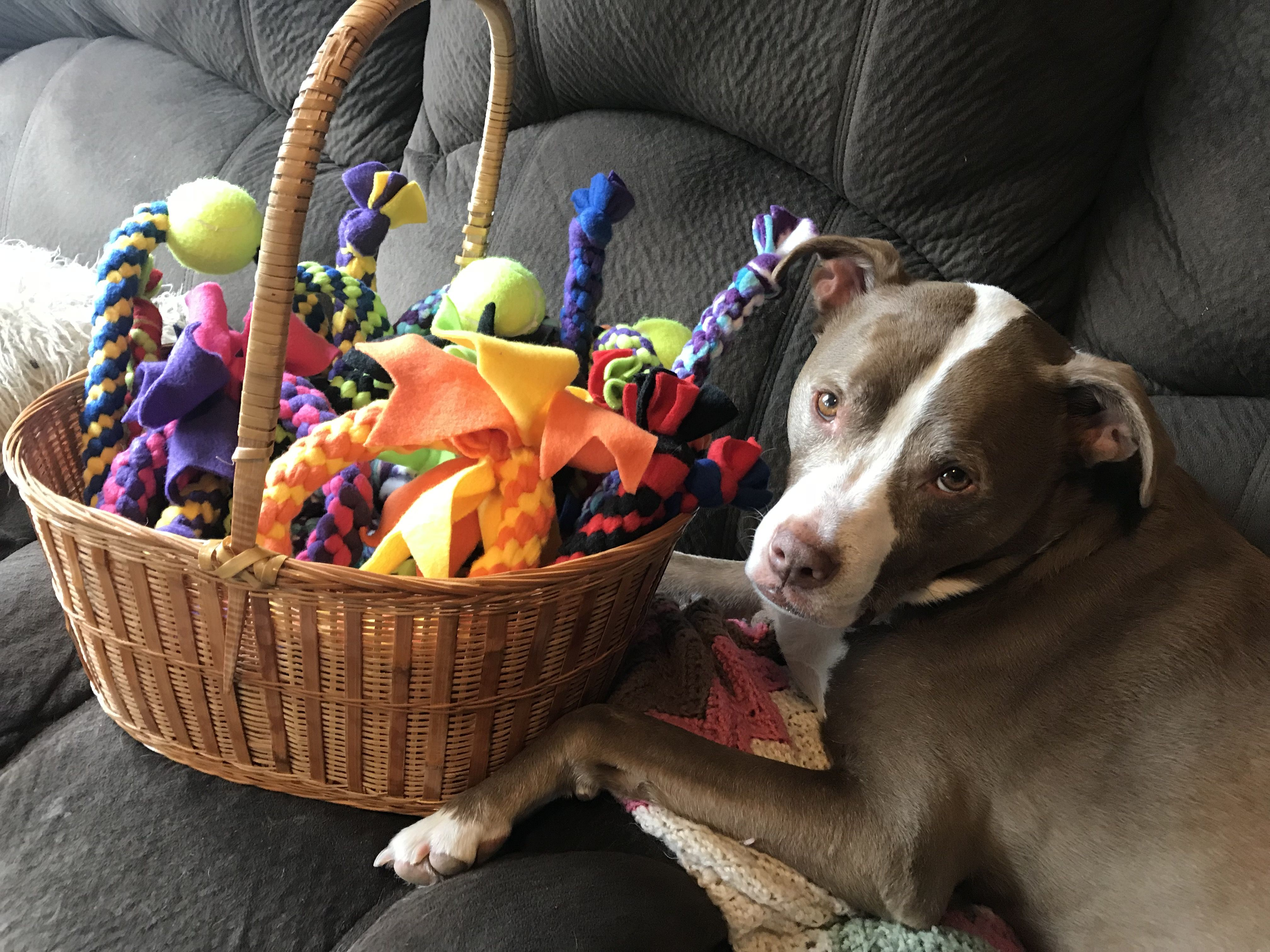 Butters the red nose pit bull guarding his new dog toys. He has a ... | Durable Dog Toys For Pit Bulls
