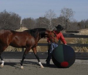 Horse Training: With a Ball | @EquiSearch.com