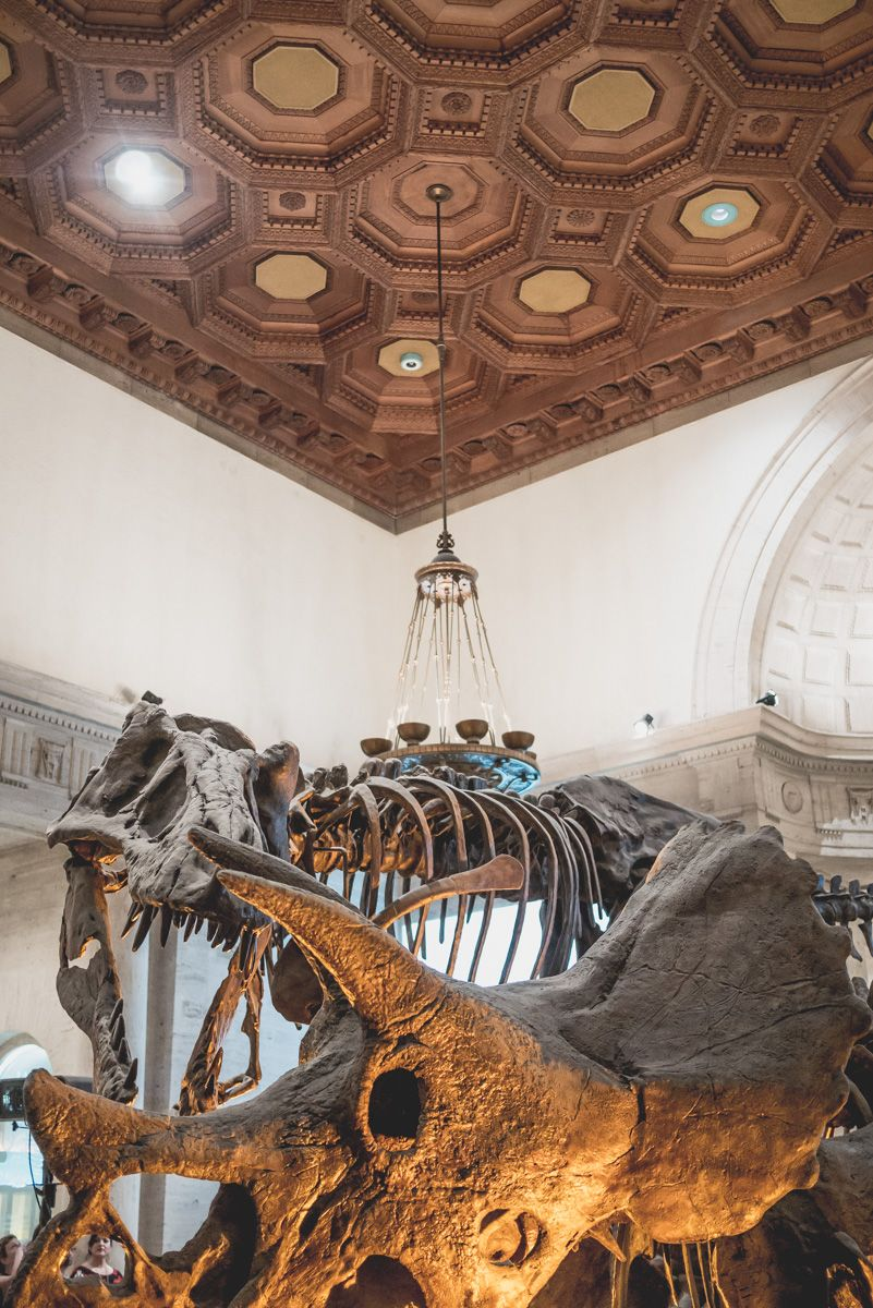 A Visual Takeover at Natural History Museum of Los Angeles