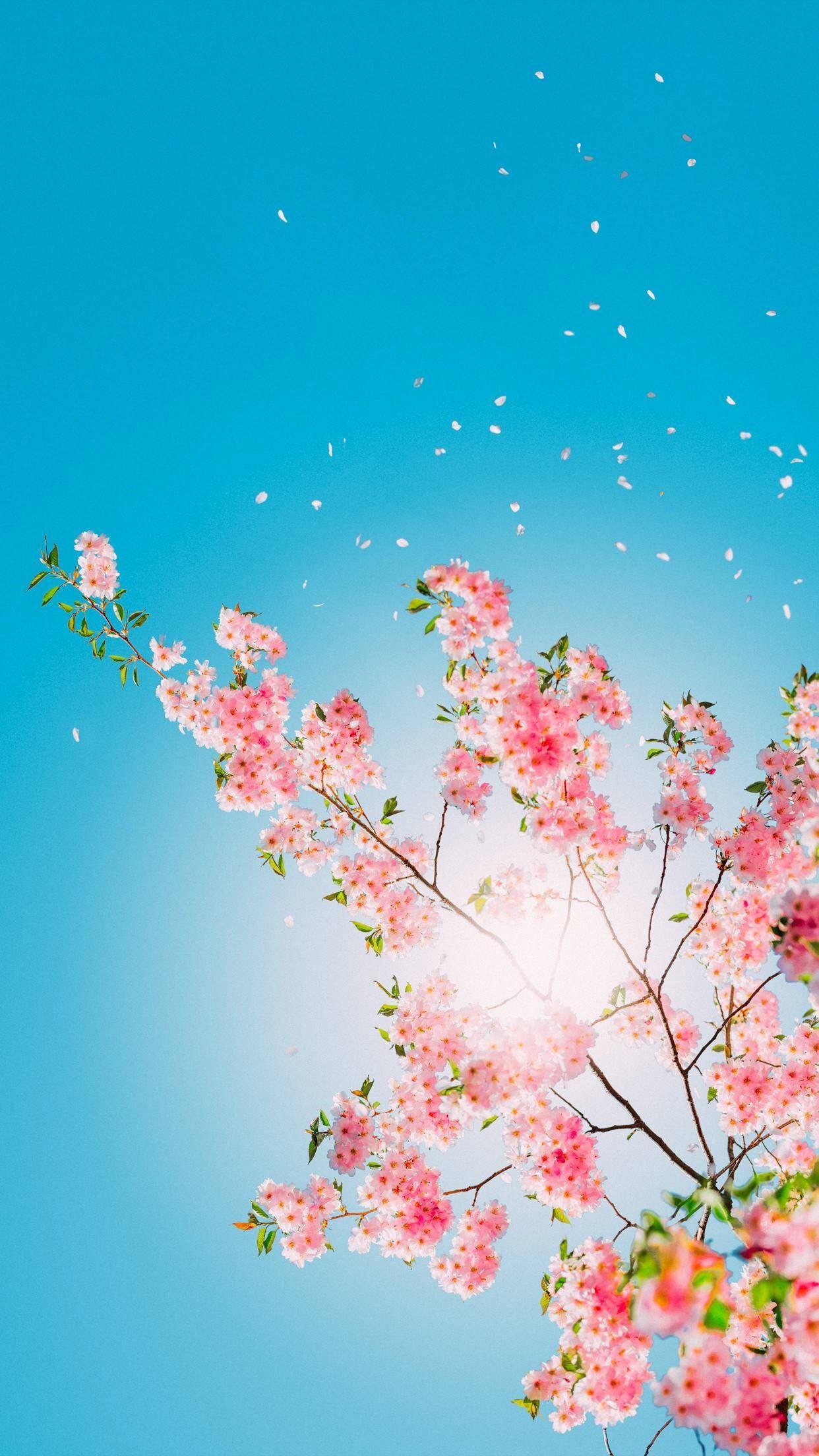 Flower Wallpaper For Iphone Xr 3d Wallpapers Flower Background Wallpaper Flower Iphone Wallpaper Spring Wallpaper