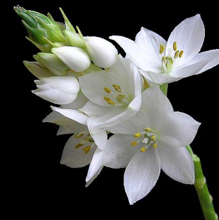 Fleurs blanches jardin blanc pinterest fleurs for Jardin de fleurs blanches
