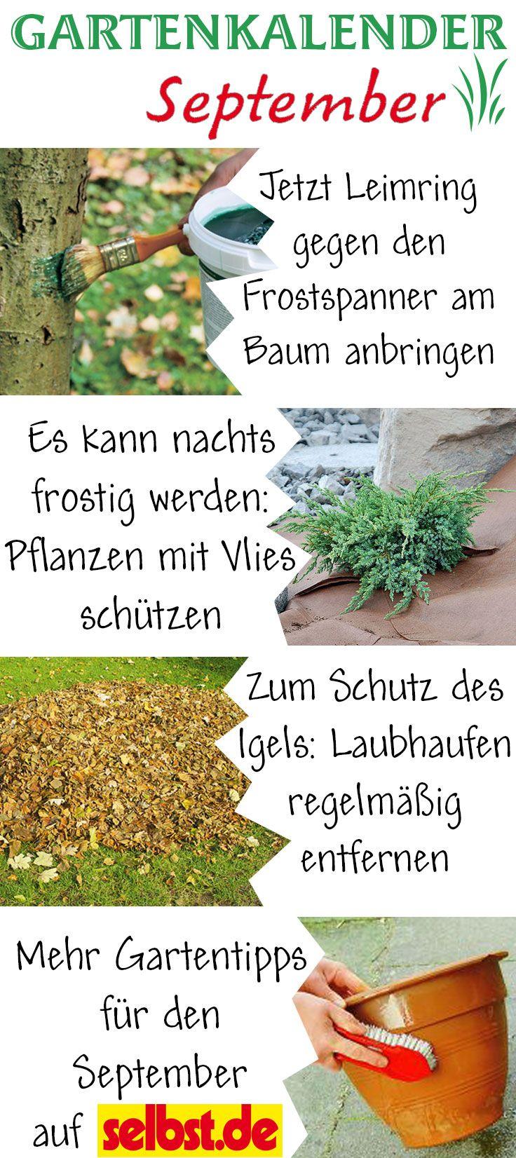 Im september kann es schnell mal frostig werden in der nacht sch tz deine pflanzen mit vlies - Gartenarbeit im september ...