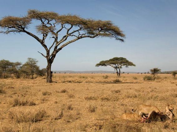 Paysage de savane paysages savane pinterest savane - Animaux savane africaine ...