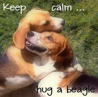 Beagles love hugs!