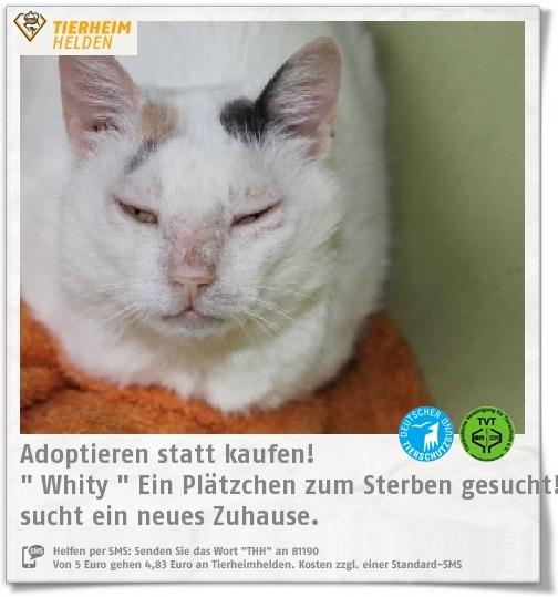 Fiv Positive Whity Aus Dem Tierheim Munchen Sucht Einen Platz Auf