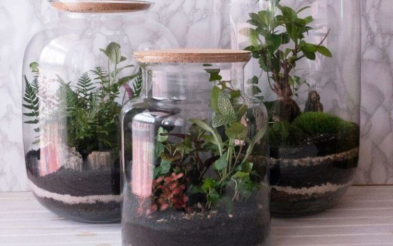 Repotting Snake Plants: When Why And How To Repot Snake ...