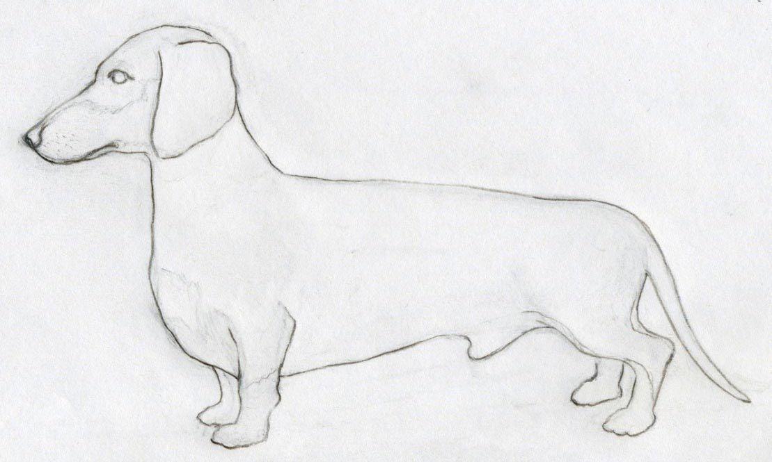 How To Draw Dog Dog Drawing Easy Animal Drawings Animal Drawings