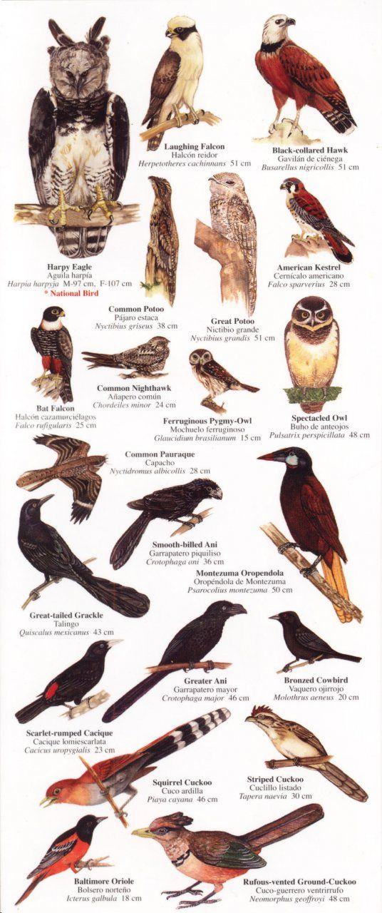 Birds Of Costa Rica Costa Rica Animals World Birds Wild Birds Unlimited