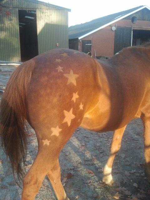 ster scheren paard google zoeken - Pferd Scheren Muster