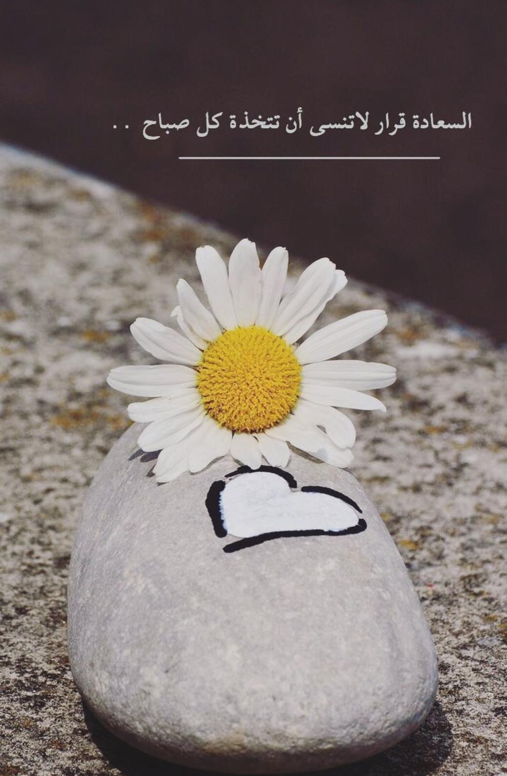 الأحمق يبحث عن السعادة في الاماكن البعيدة أما الحكيم فيزرعها تحت قدميه حكم كلمات أقوال أدب نجاح فكر مقولة كت Social Quotes Words Quotes Wise Quotes