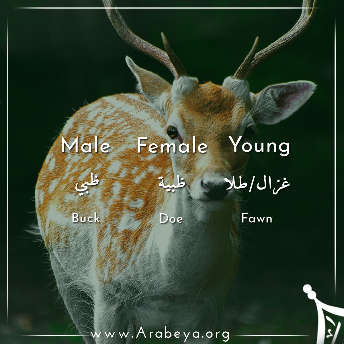 Pin On Animals Names Males Females And Young