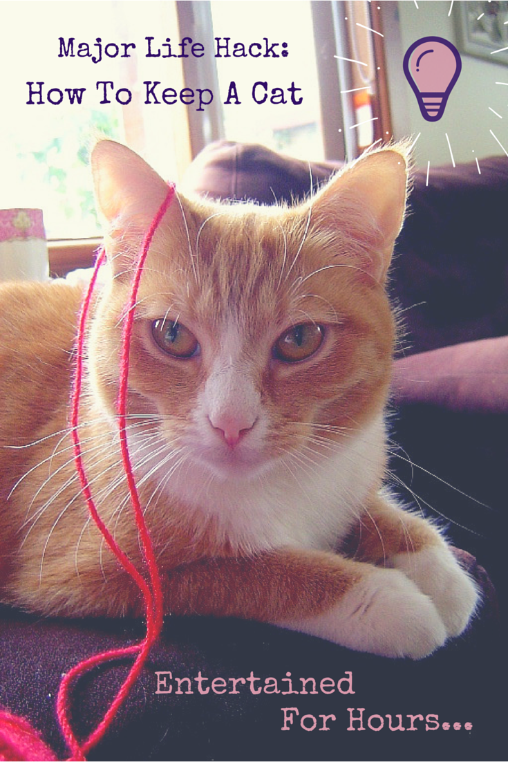 Major Life Hack How To Keep Cats Entertained Cat Toys Diy Pet
