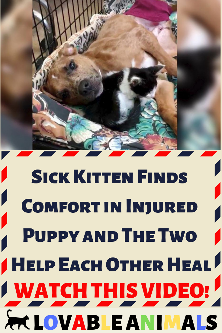 Sick Kitten Finds Comfort in Injured Puppy and The Two