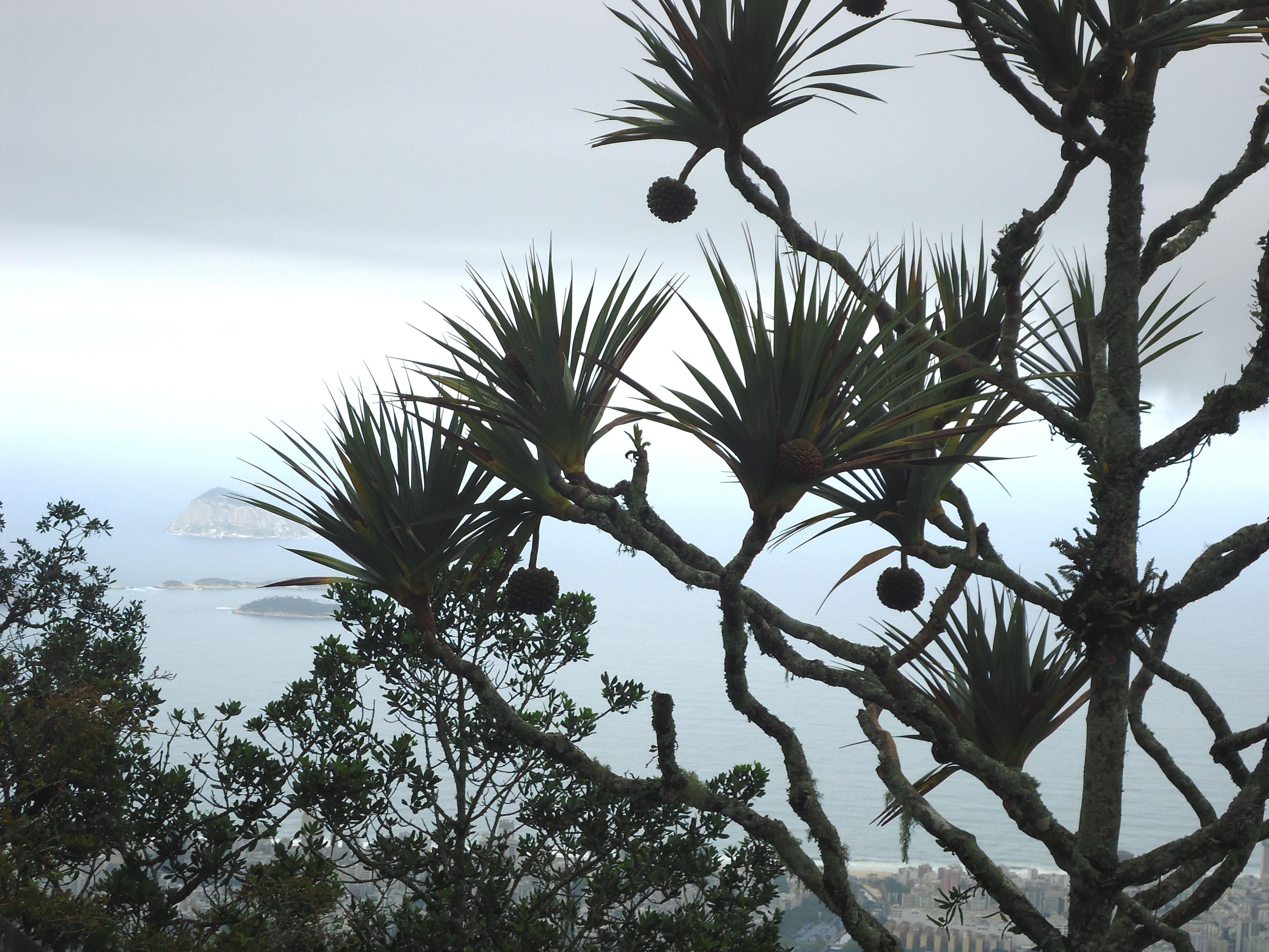 Floresta da Tijuca no alto da Boa Vista - Corcovado / 2014