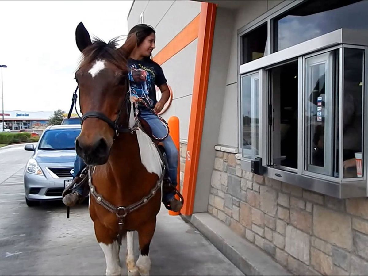 Taco Bell Customer Fined $266 for Riding Horse to Restaurant - Eater