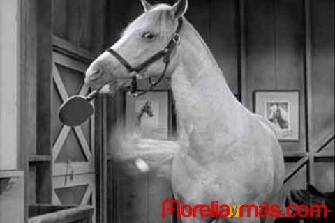 el caballo con voz pelicula serie - Buscar con Google