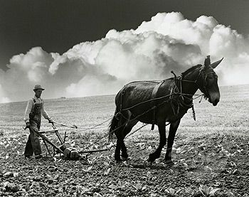 Two charming men plowing