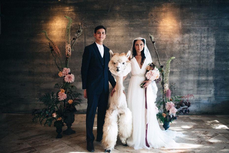 Modern Vintage Wedding Ideas With Three Adorable Alpacas Modern Vintage Weddings Vintage Wedding Wedding