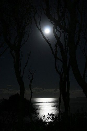 Full Moon through Trees, Jervis Bay - Geoff Coleman