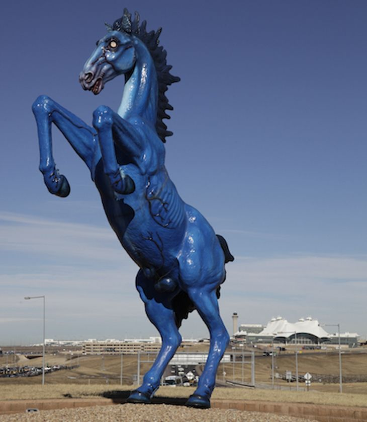 Blue Mustang - Denver Daily Photo | A HORSE IS POETRY IN MOTION ...