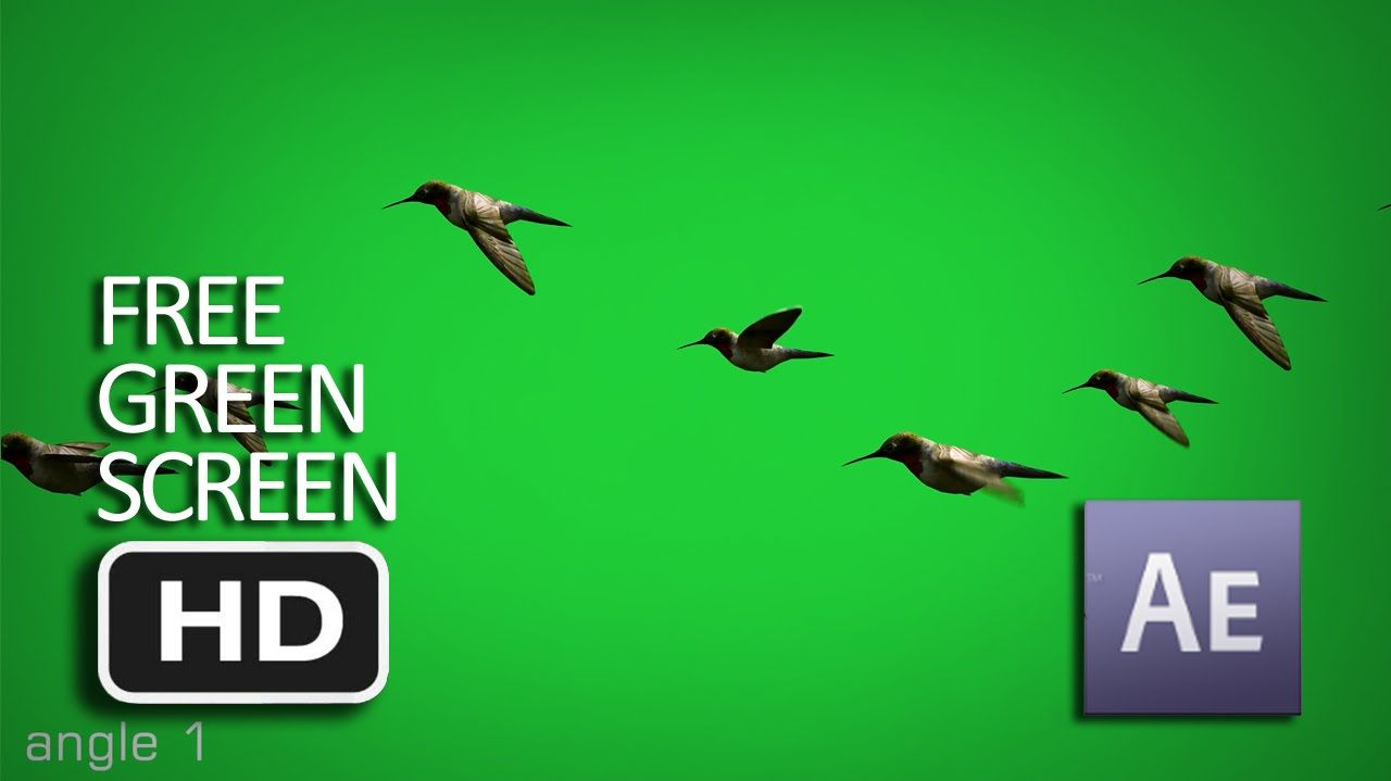 Free Green Screen Flying Birds Animated Moving Hd Free Green Screen Greenscreen Birds Flying