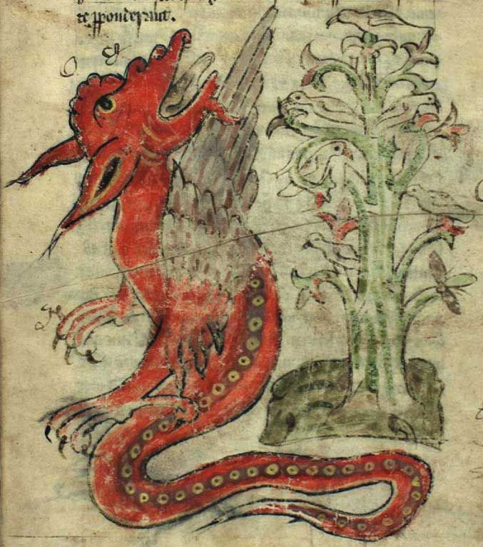 Kongelige Bibliotek, Gl. kgl. S. 1633 4º, Folio 49r  Doves in a peridexion tree, being threatened by a dragon. The doves are safe because the dragon fears the tree and its shadow.