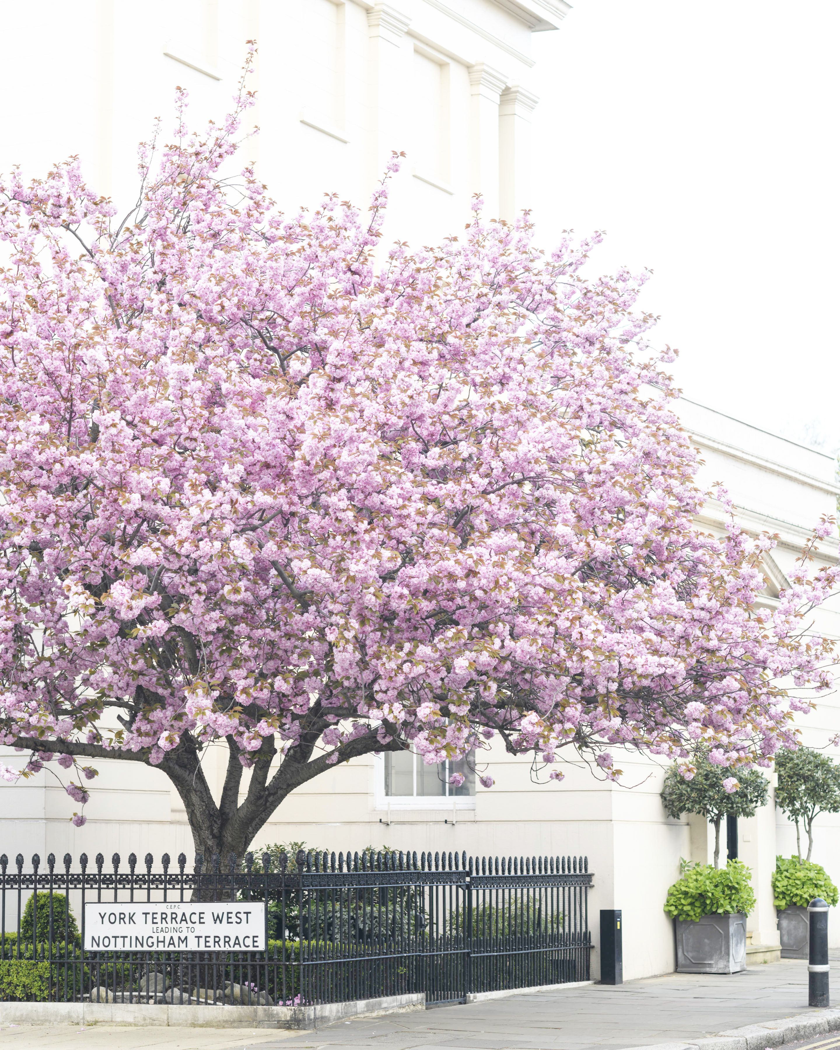London Photography Cherry Blossoms At York Terrace England Etsy Gallery Wall Prints London Photography Large Wall Art