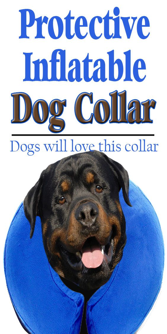 The Inflatable Collar Is Designed To Protect Your Pets
