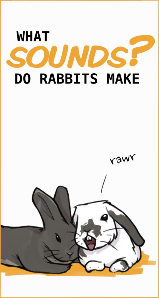 Rabbit Sounds What are they trying to tell you? in 2020