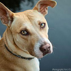 Ajax, Ontario Terrier (Unknown Type, Medium). Meet
