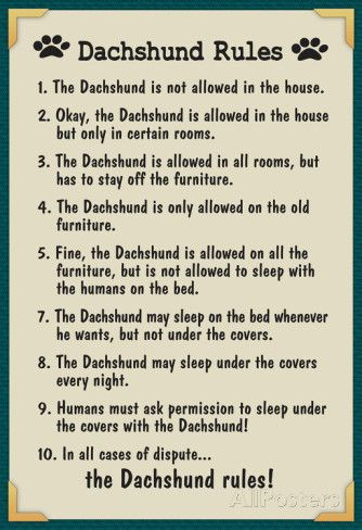 Dachshund House Rules Posters Boxer Dogs Boxer Boxer Puppies
