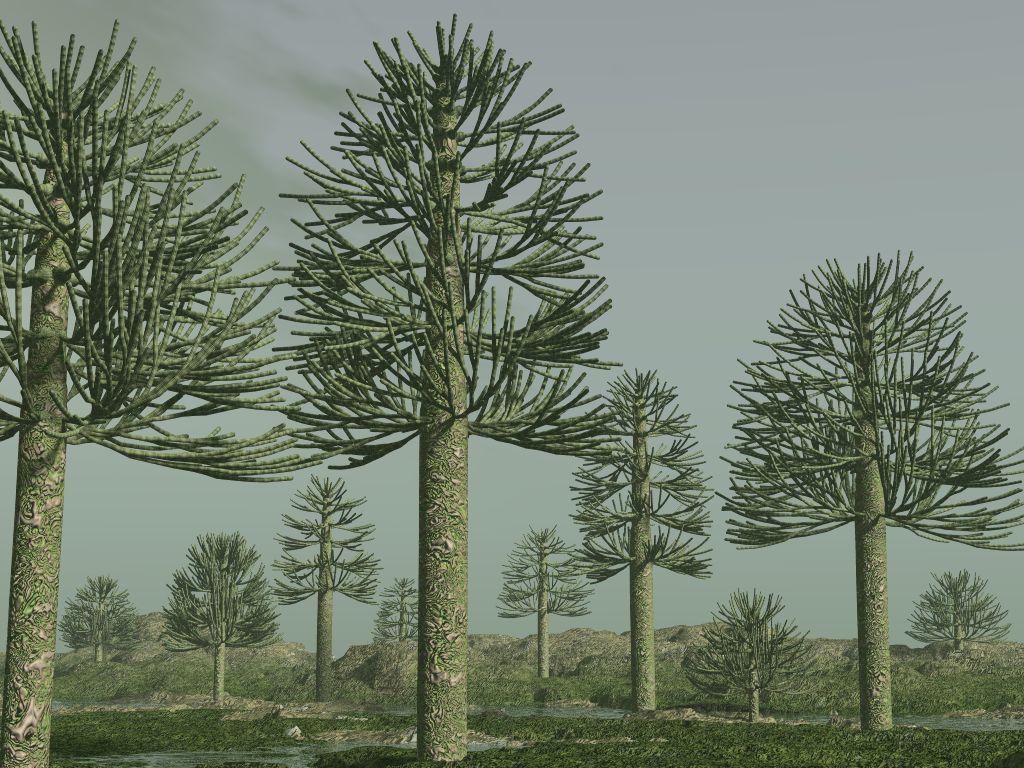 Afbeeldingsresultaat voor carboniferous plants
