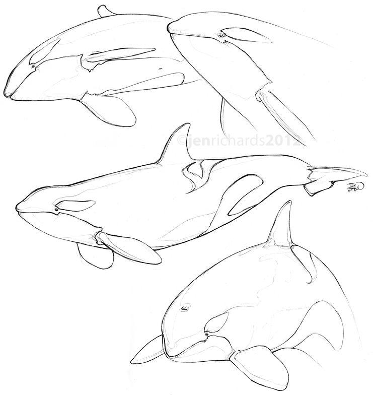 Orca Drawing Category Archives Sketches Ballenas Dibujo Bocetos De Animales Y Bocetos