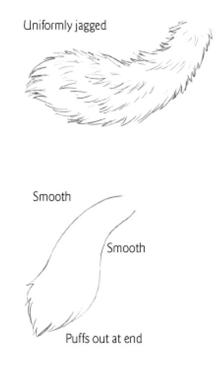 Tail Types 1 Furry Drawing Cat Drawing Tutorial Anime Drawings Tutorials