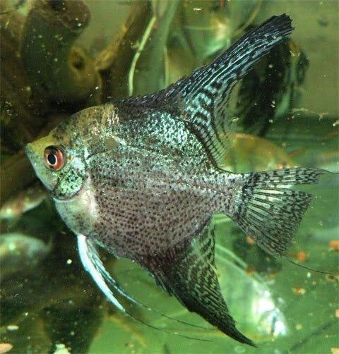 Tropische Vissen Tropische Vissen Vissen Exotische Vissen