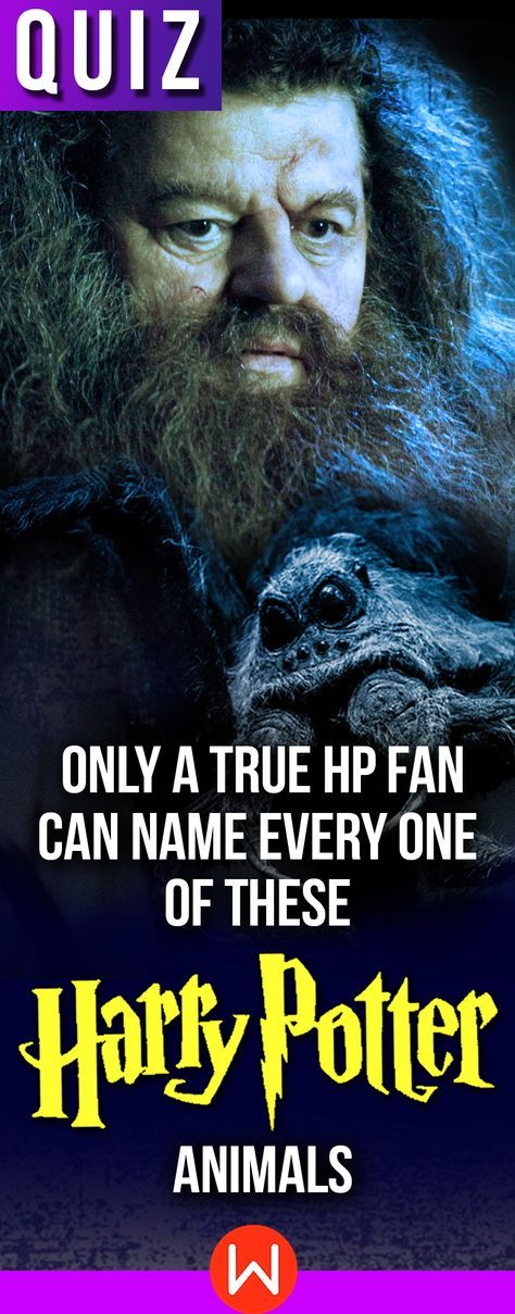 Quiz Only A Potterhead Can Name Every One Of These