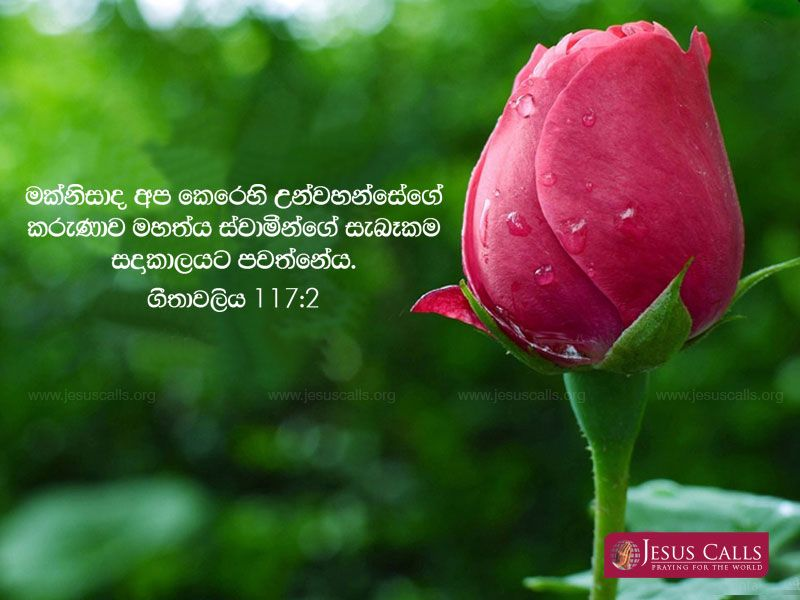 Pin By Jesus Calls On Holy Bible Sinhala Anniversary Quotes