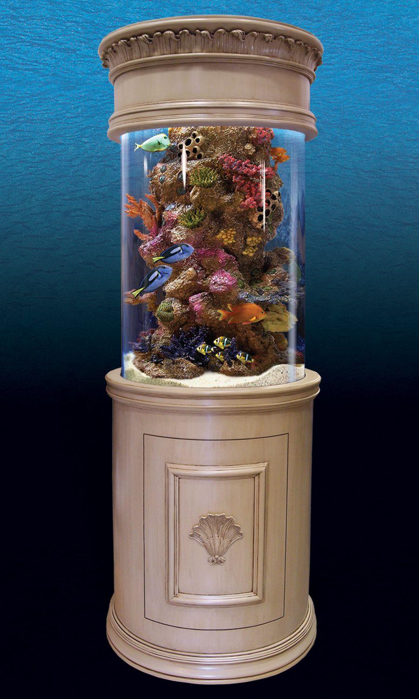 Fish tank toilet - The Pearl Aquarium One Day