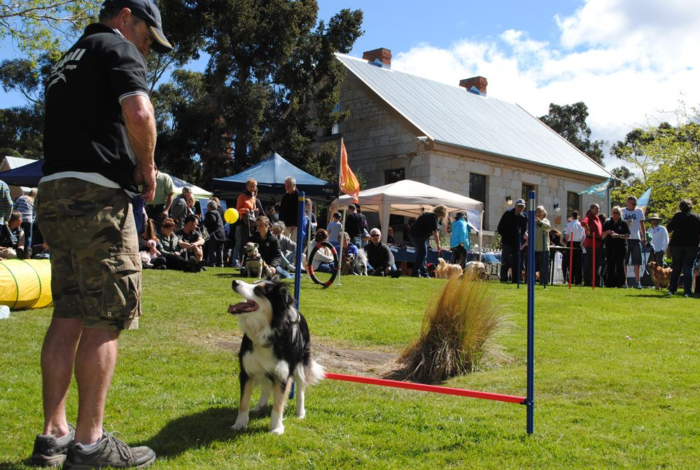 Dog S Day Out 2016 Rosny Farm October 2 Australian Dog Lover Expect To Be Dazzled By The Agility Dogs Agility Training For Dogs Dogs Day Out Dog Agility