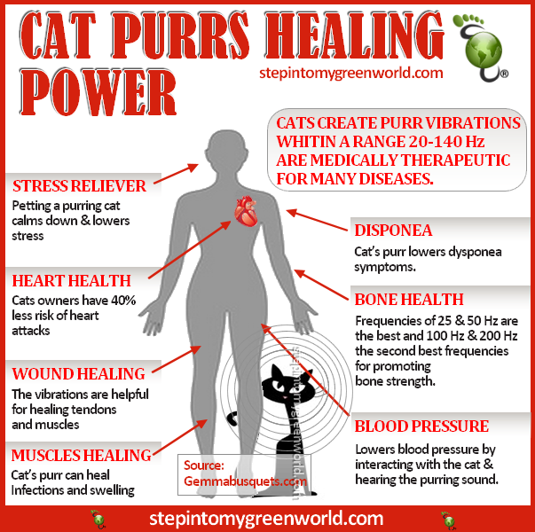 The Amazing Healing Power Of A Cats Purr Cat purr