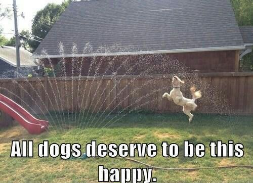 Dogs deserve to be happy!