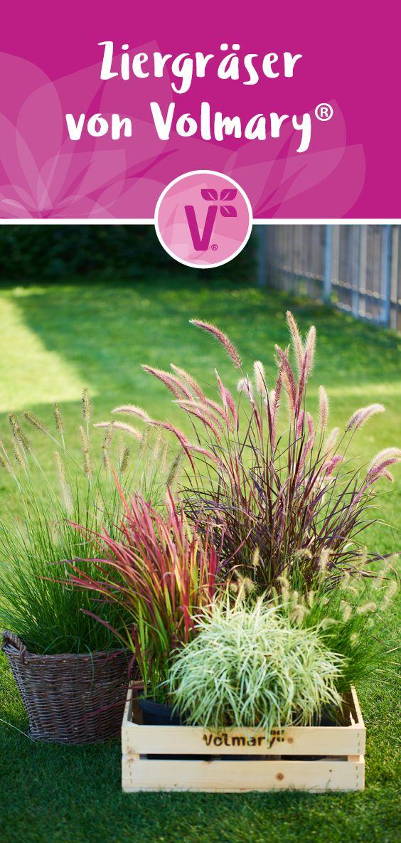 Photo of Wunderschöne Ziergräser für deine Herbstbepflanzung