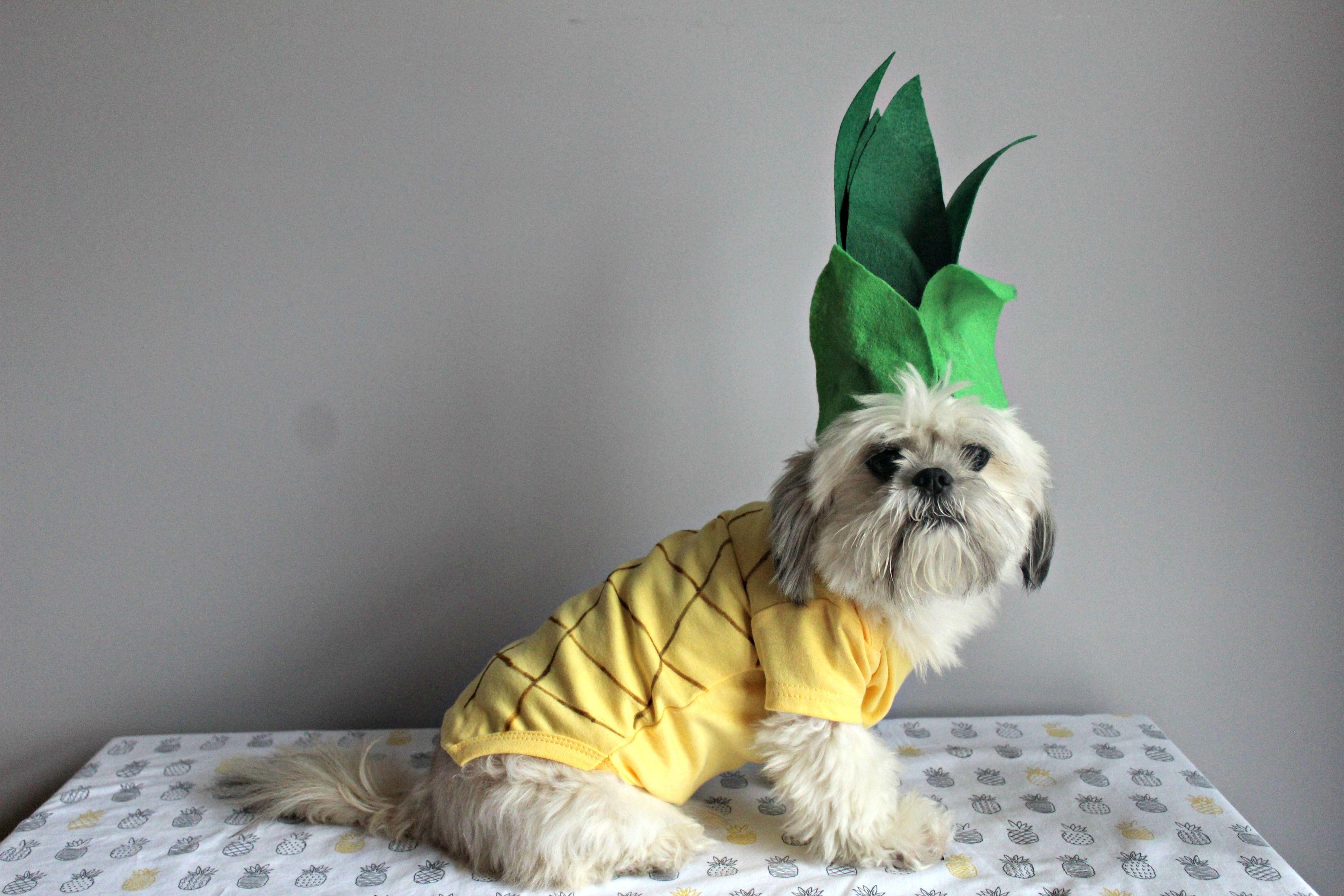 Diy Pineapple Dog Halloween Costume Dog Halloween Costumes