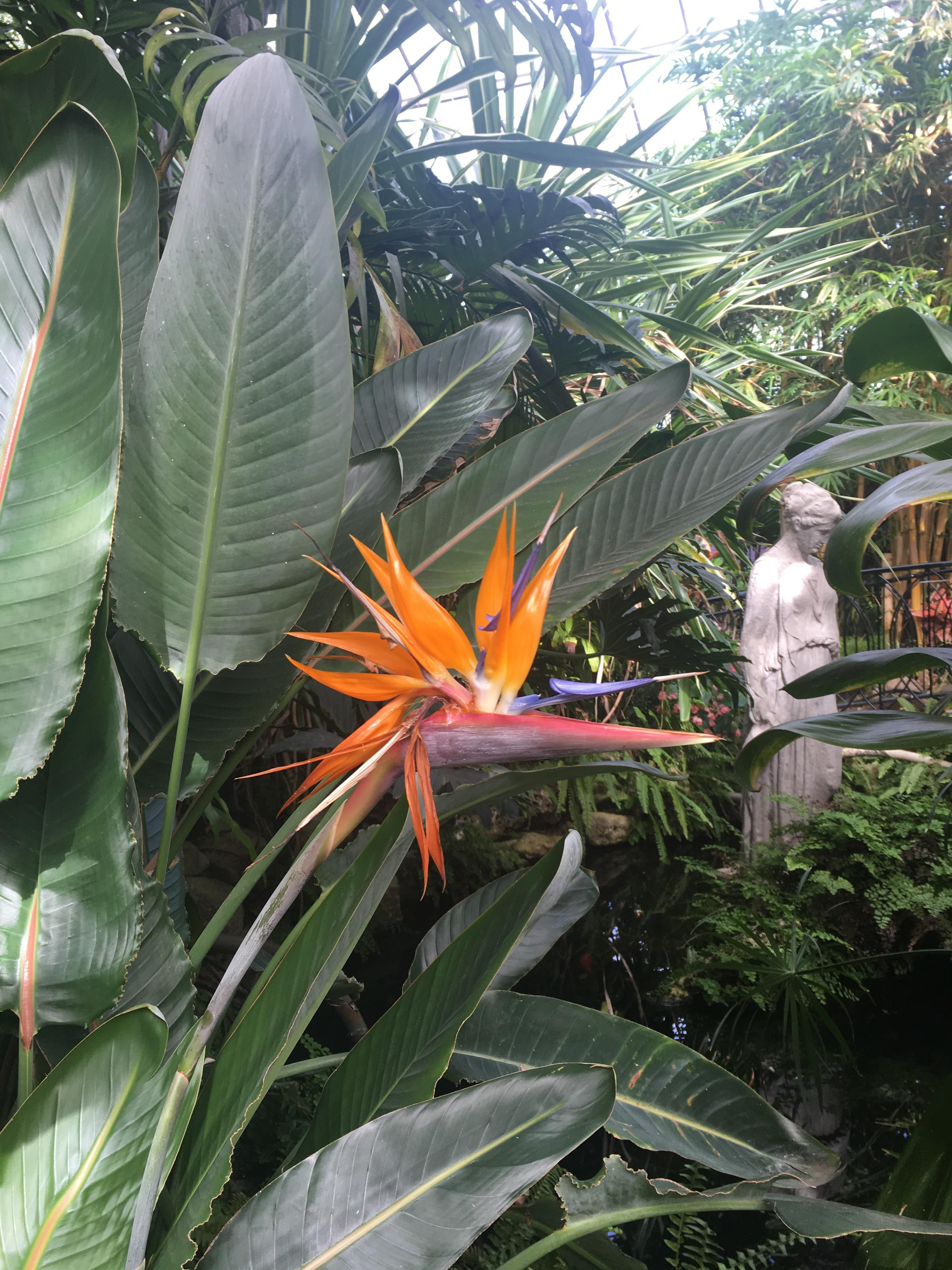 Was Today Years Old When I Learned Why Theyre Called Bird Of Paradise Gardening Garden Diy Home Flowers Roses N Birds Of Paradise Plant Leaves Lawn Care