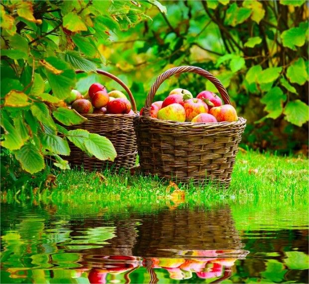fresh fruits of nature