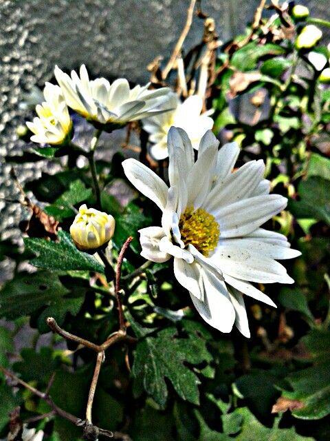 Flor, pra onde foi você flor?