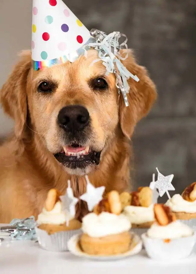 "Pupcakes! (Dog cupcakes with ""frosting"") Recipe in 2020"