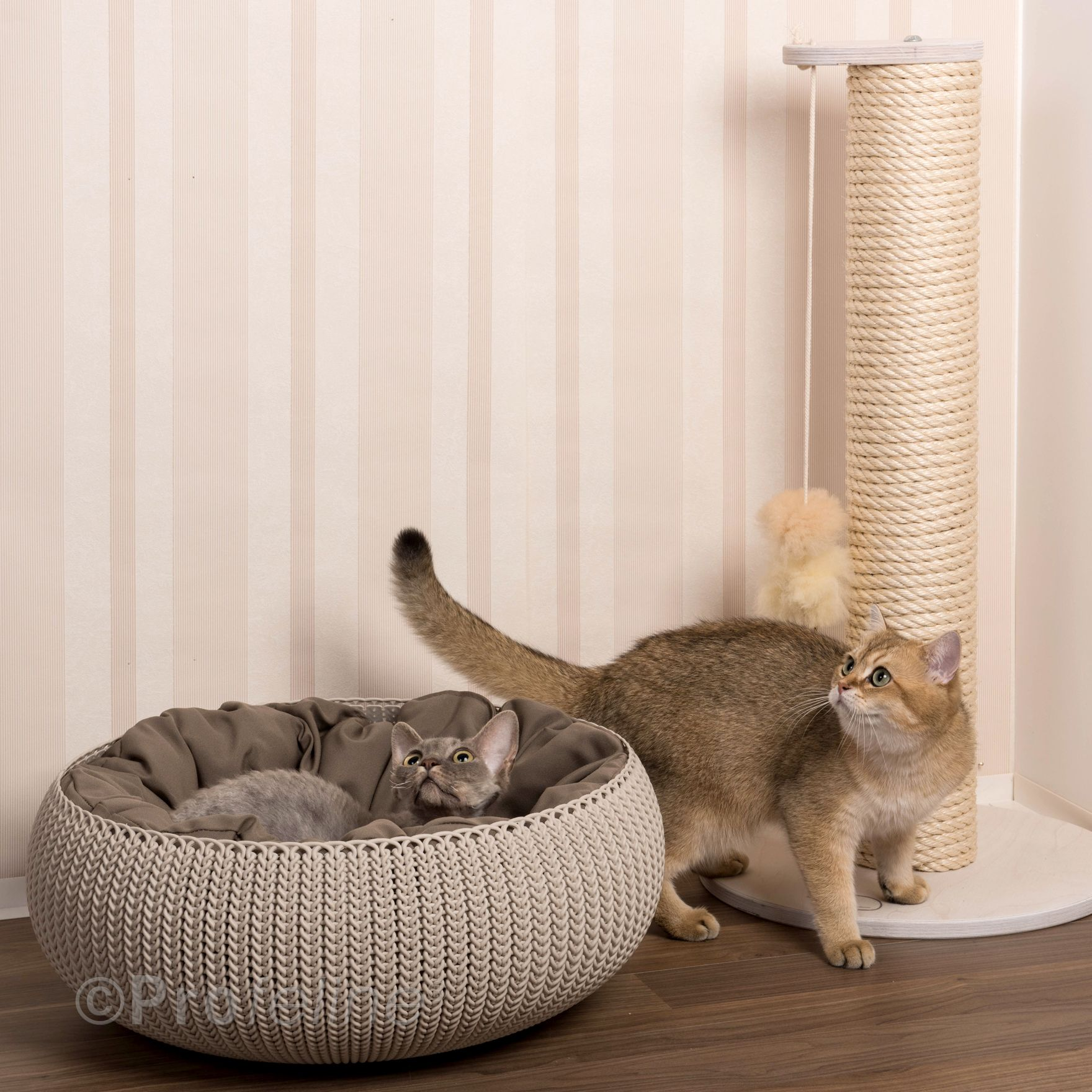 Curver Cozy Pet Home Knit and scratching tree Ina from Profeline