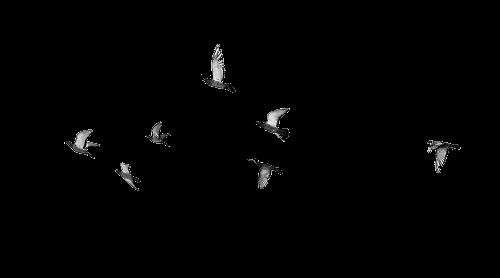 Pin By Lina Prasini On Romanov Birds Flying Flying Bird Tattoo Birds Tattoo